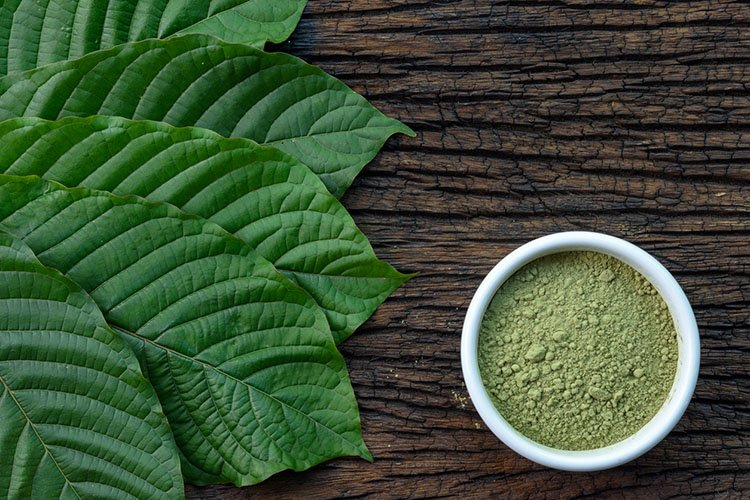 Kratom Leaves Veins